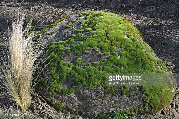 Moss Growing On Tree Trunk