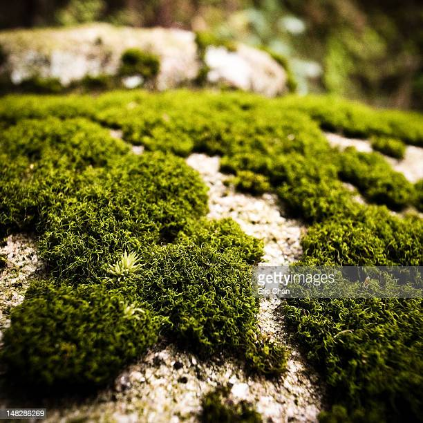 Moss growing