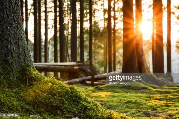 moss in forest - muschio flora foto e immagini stock
