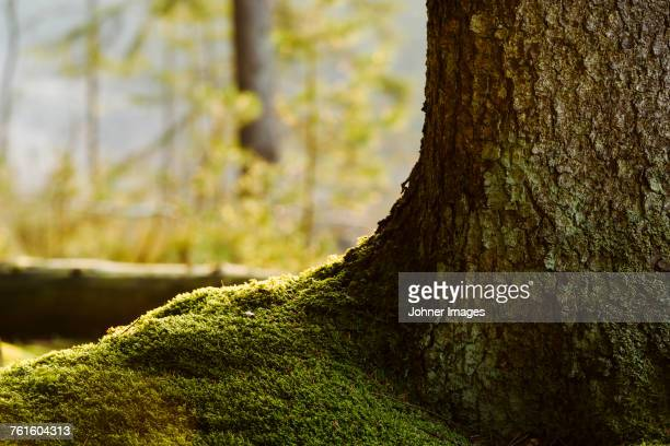 moss in forest - tree trunk stock pictures, royalty-free photos & images