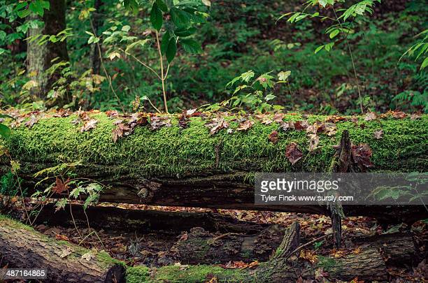 moss on a log - sursly stock pictures, royalty-free photos & images