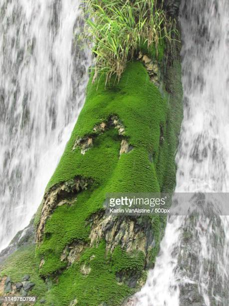 moss on a rolling log - san saba polo team stock pictures, royalty-free photos & images