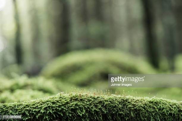 moss on log in forest - moss stock pictures, royalty-free photos & images
