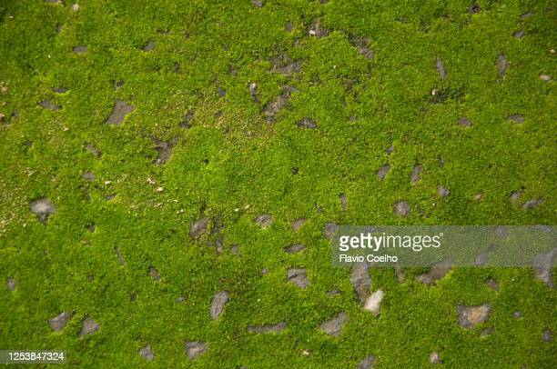 moss on rock background texture - moss stock pictures, royalty-free photos & images