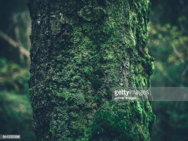 moss on tree trunk - moss stock pictures, royalty-free photos & images