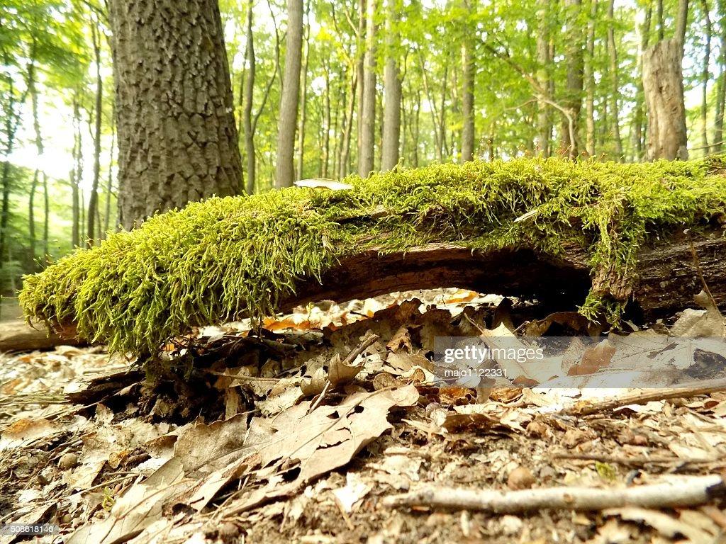 Moss on wood : Stock Photo