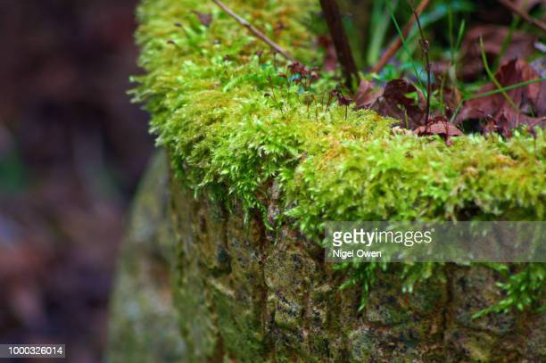 moss - nigel owen stock pictures, royalty-free photos & images