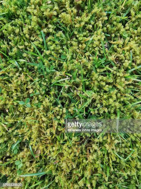 moss - lawn stock pictures, royalty-free photos & images