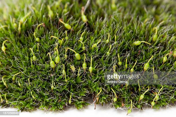 moss - andrew dernie stock pictures, royalty-free photos & images