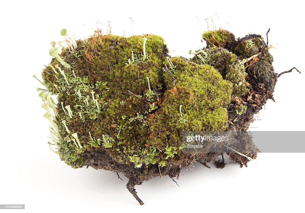 Moss : Stock-Foto