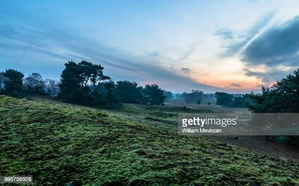 moss - william mevissen stock photos and pictures