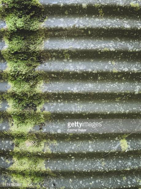 moss water tank - emma baker stock pictures, royalty-free photos & images