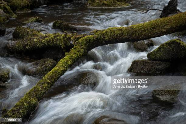 moss-clad branch lying across a fresh creek flowing between moss-clad rocks - arne jw kolstø stock pictures, royalty-free photos & images