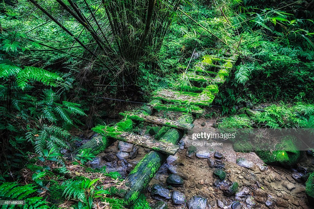 A moss-covered footbridge on a hiking trail in Taiwan... : News Photo