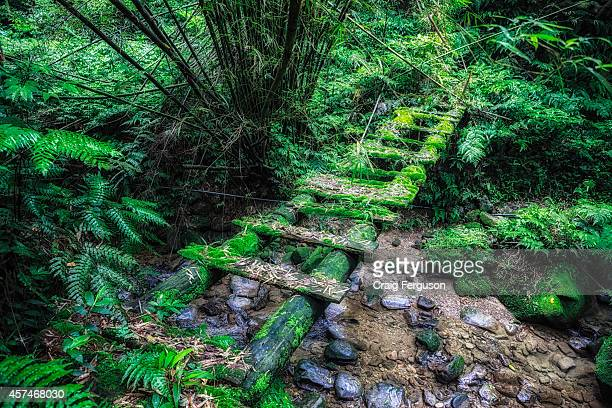 A mosscovered footbridge on a hiking trail in Taiwan