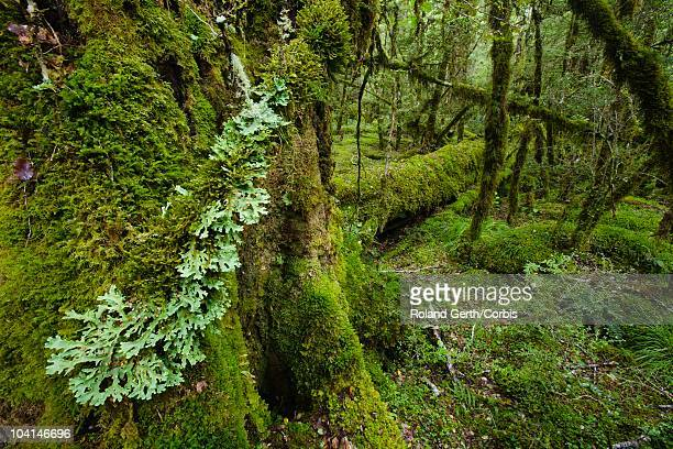 moss-covered forest - public domain stock pictures, royalty-free photos & images
