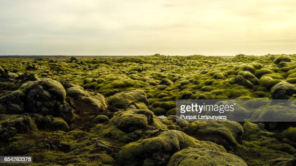 moss-covered lava fields in south iceland. - lava plain stock pictures, royalty-free photos & images
