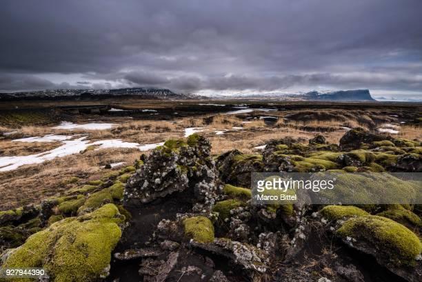 moss-covered lava rock, between vik and hoefn, sudurland, island - austurland stock-fotos und bilder