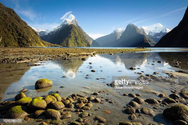 moss-covered stones at milford sound, new zealand - wilderness stock photos and pictures
