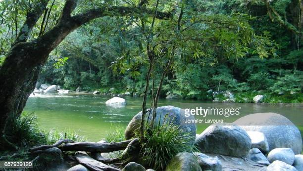 mossman gorge in daintree - unesco stock pictures, royalty-free photos & images