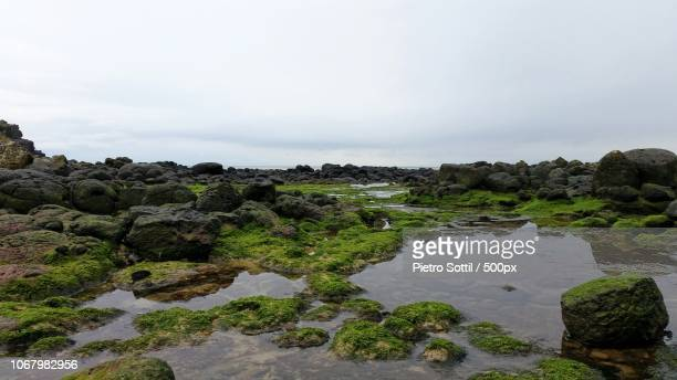 mossy boulders in swamp - salt_marsh stock pictures, royalty-free photos & images