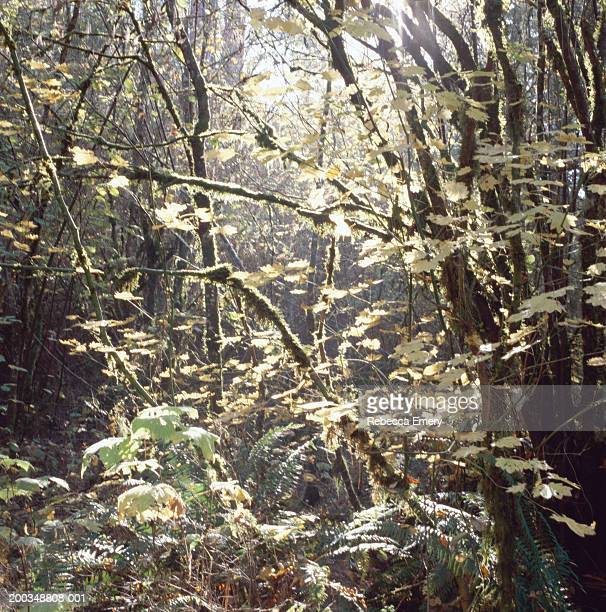 mossy branches and leaves in forest - emery stock photos and pictures