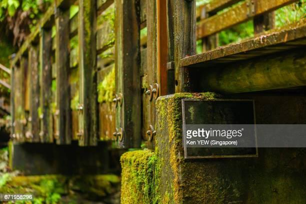 Mossy Bridge in Yakusugiland Nature Park, Yakushima Island, Japan.
