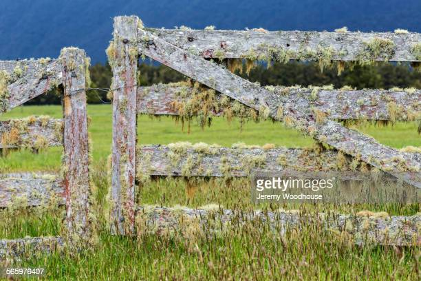 Mossy fence gates in rural field