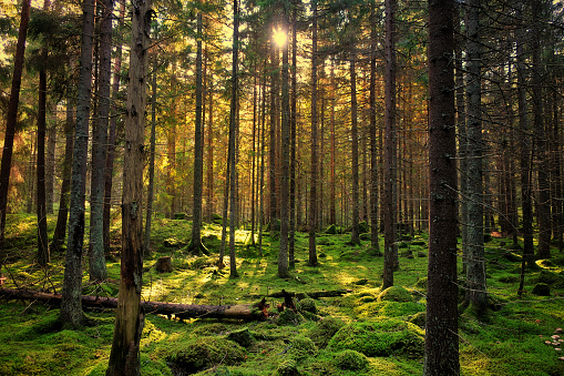 Mossy green forest 862701348