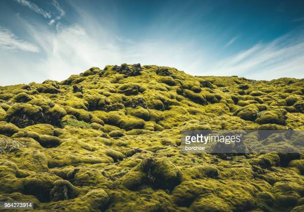 mossy lava field in iceland - moss stock pictures, royalty-free photos & images