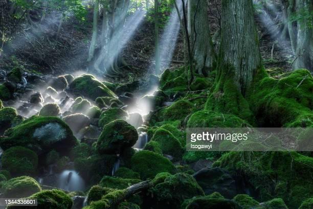 mossy mountain stream illuminated by rays of sunlight - isogawyi stock-fotos und bilder