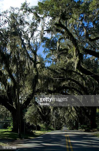 mossy oaks, inverness florida - gainesville florida stock photos and pictures