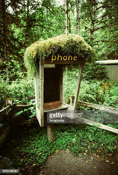 Mossy Phone Booth at Olympic National Park, WA. USA.