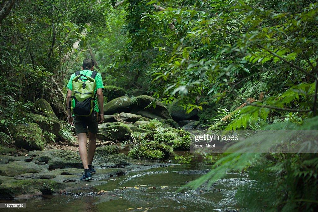 Mossy rainforest stream hiking, Okinawa : Stock Photo
