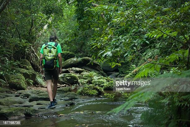 Mossy rainforest stream hiking, Okinawa