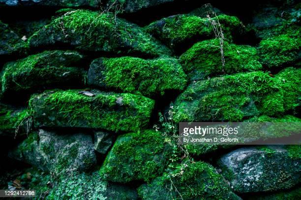 mossy rock wall - kentucky fotografías e imágenes de stock