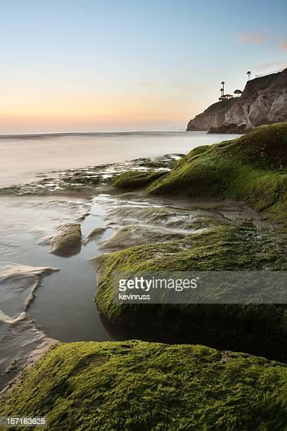 Mossy Rocks at Pismo Beach