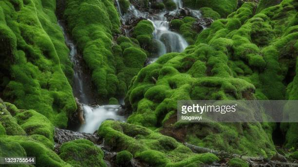 mossy rocks in deep mountain - isogawyi stock pictures, royalty-free photos & images