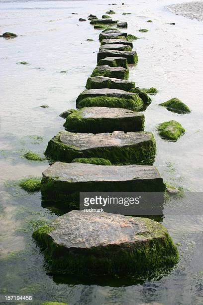 mossy stepping stones - clear sky stock pictures, royalty-free photos & images