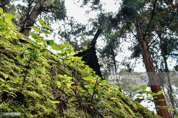 mossy stone walls - south china stock pictures, royalty-free photos & images