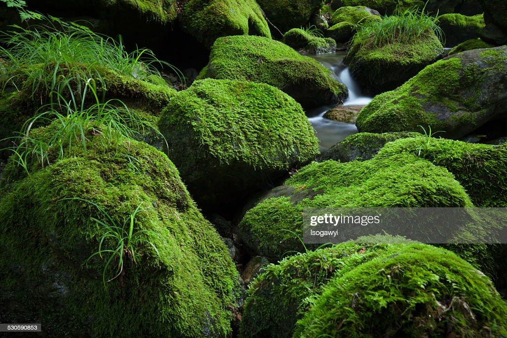 Mossy Stream : ストックフォト