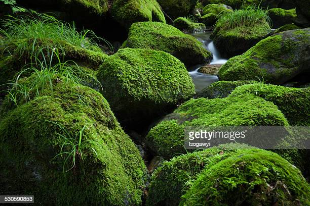 mossy stream - isogawyi stock pictures, royalty-free photos & images