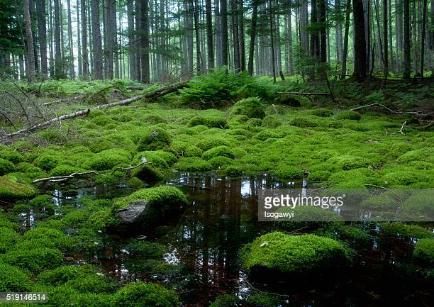 mossy swamp - isogawyi stock pictures, royalty-free photos & images