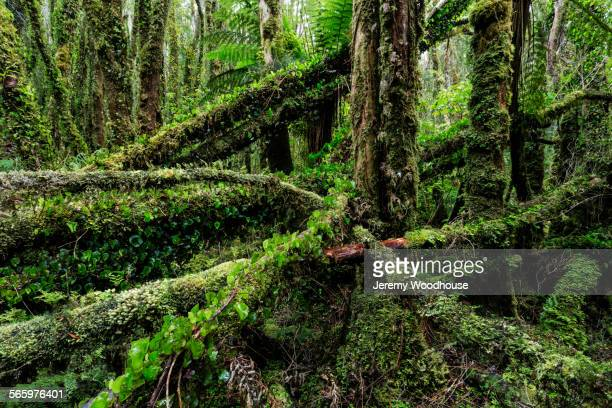 Mossy trees in remote forest