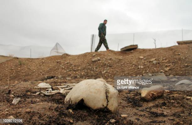 Mostly human bones lie in a mass grave near the Sinjar Mountains in Sinjar Iraq 15 December 2016 Sinjar is one of more than 30 nameless towns in...