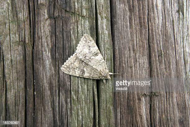 Moth Camouflage