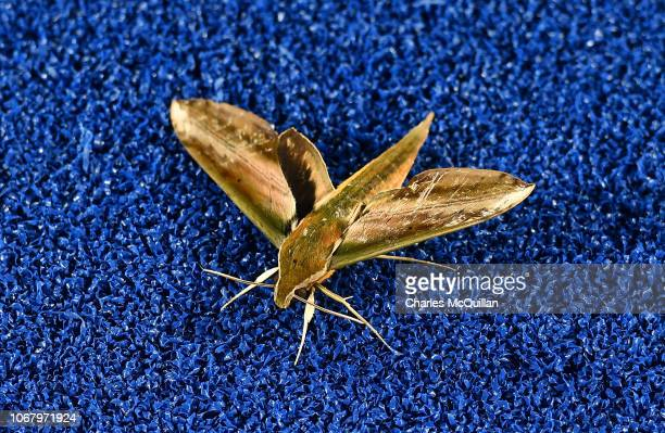 A moth is seen on the field during the FIH Men's Hockey World Cup Pool A match between New Zealand and Argentina at Kalinga Stadium on November 3...