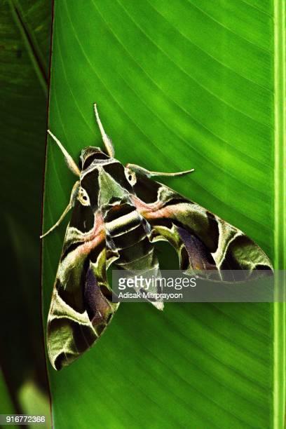 Moth on green leaf (vertical)