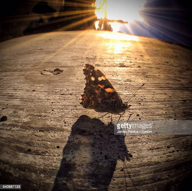 moth on textured surface during sunset - sunset moth stock photos and pictures