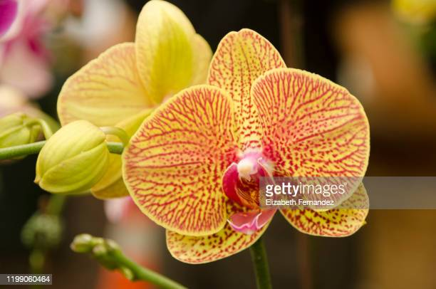 Orchid Yellow Leaves Stock Pictures Royalty Free Photos Images